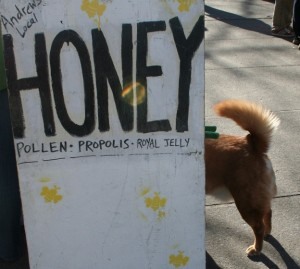 Local honey and a market canine. Photo, Moo Dog Press Magazine, all rights reserved.