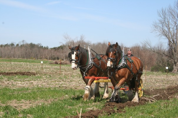 Spring plow. MDP photo.