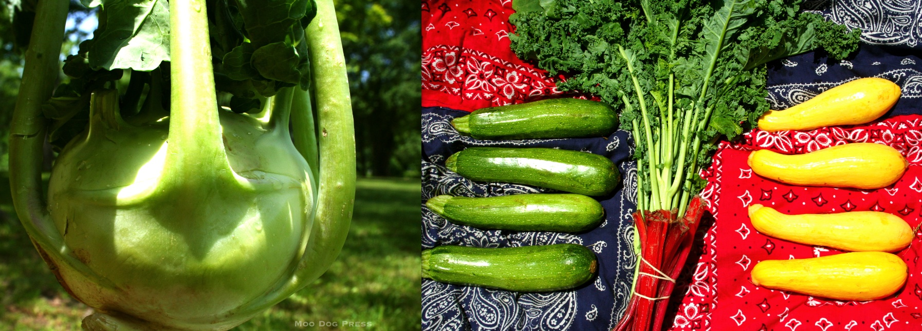 Colorful, rich in vitamins, grown by Killam & Bassette, part of week two CSA.