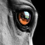 Eye of an equine.