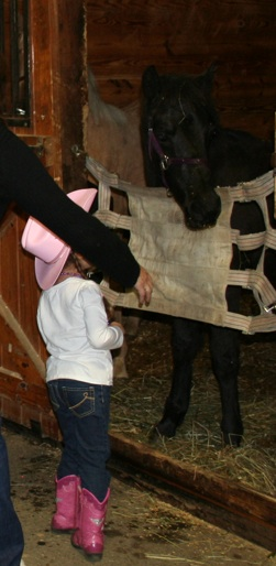 Foal hello - girl in jeans and pink cowboy hat.