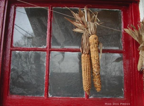 November-Indian-Corn. © Chris Brunson, Moo Dog Press