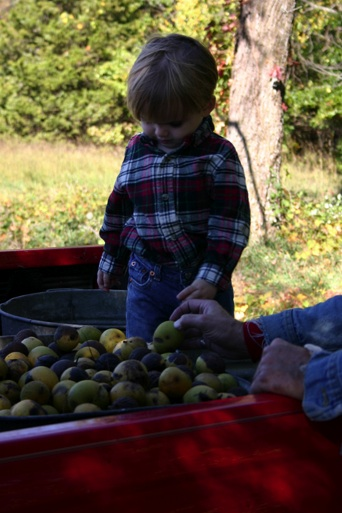 Young boy with black walnuts.