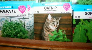 Treats to grow for pets too, along with herbs, flowers, bulk seed.