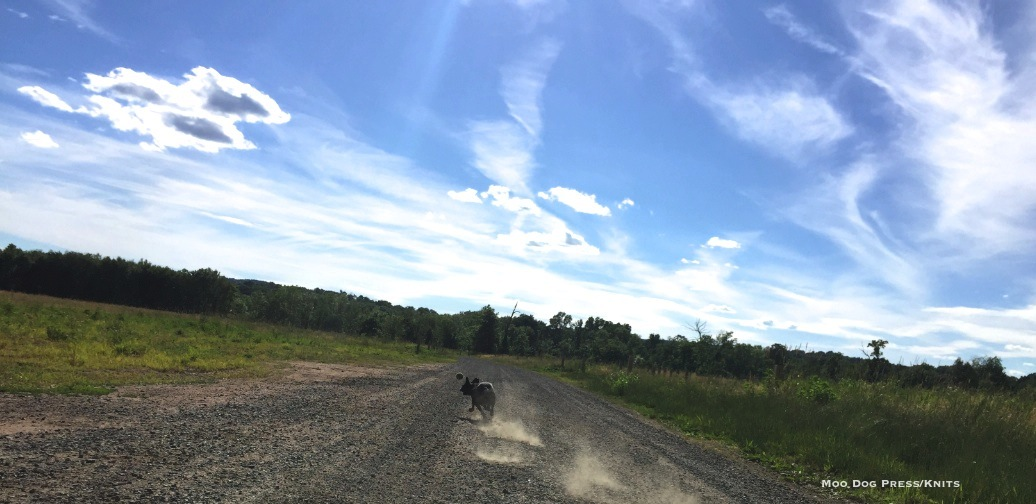 Boston terrier in full pursuit of her happiness - a ball - under a big sky. TW/MDP