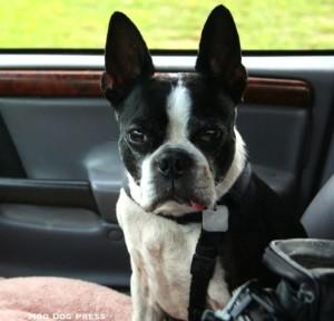 My Chewy dog. © Moo Dog Press